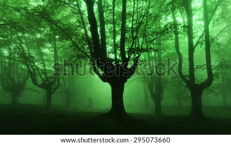 dark forest with green fog