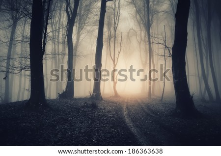 dark forest with path - stock photo
