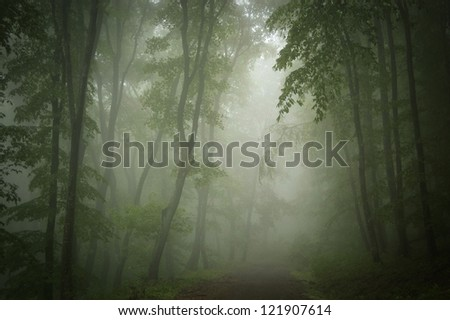 dark green forest background