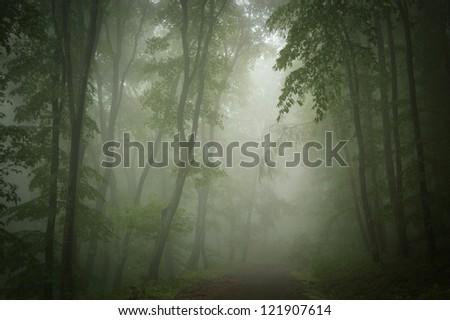 dark green forest background - stock photo
