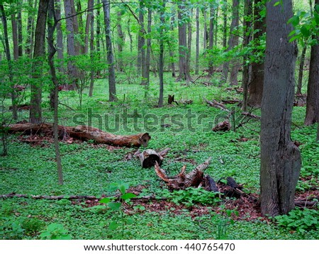 Dark Green Forest landscape with copy space. - stock photo