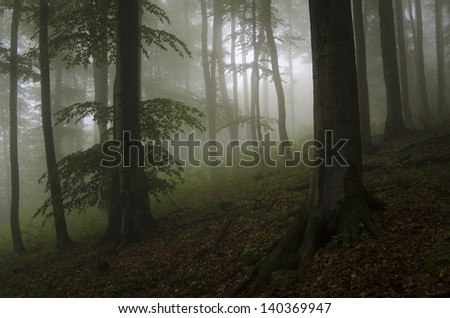 dark green forest with fog
