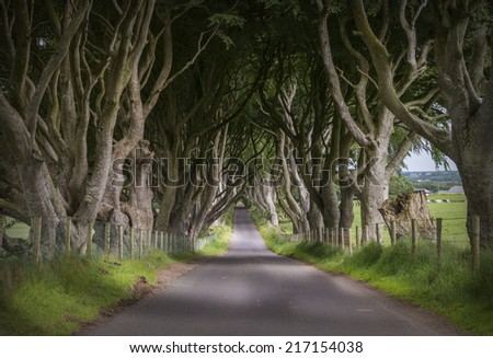 Dark Hedges in Ballymoney, Co. Antrim - stock photo