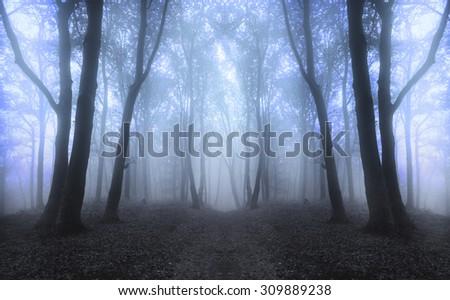 Dark horror forest fog - stock photo