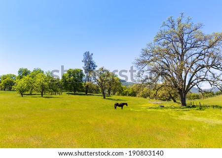 Dark horse in California meadows grasslands USA - stock photo