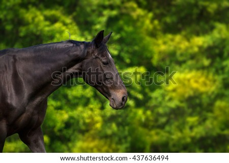 Dark horse portrait in motion against green trees