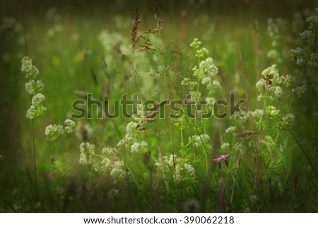 dark image of meadow flowers in the green grass and two flowers of wild carnation  - stock photo
