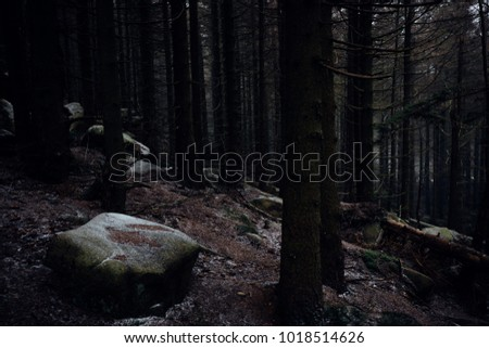 Dark impression in the coniferous forest with stone in the foreground