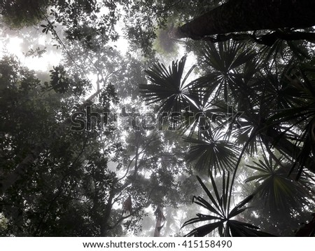 dark jungle background - stock photo