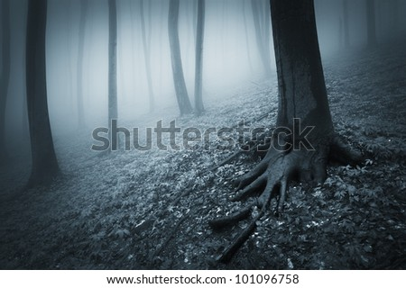 dark landscape with misty forest - stock photo