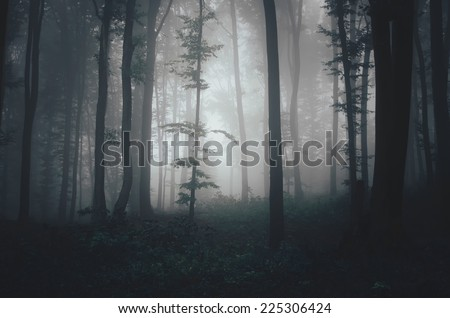 dark misty forest in soft light - stock photo