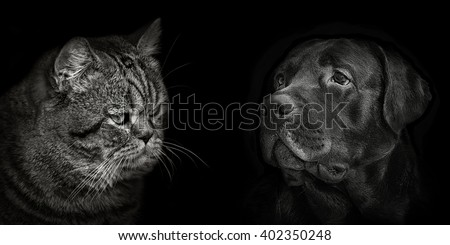 dark muzzle labrador dog and cat Scottish closeup