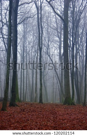 dark mysterious forest in autumn - red foliage and creepy tree trunks - stock photo