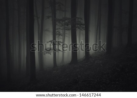 dark night in spooky forest - stock photo