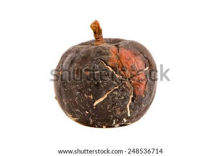 dark one rotten apple fruit isolated on white background - stock photo