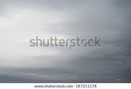 Dark overcast sky and flying birds - stock photo