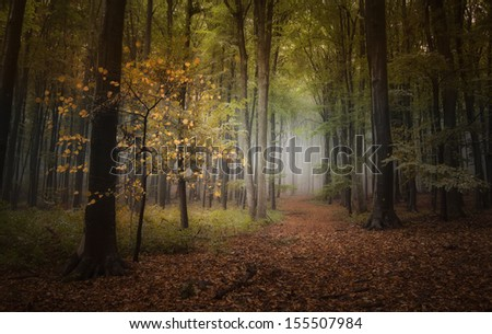 dark path in forest in autumn after rain - stock photo