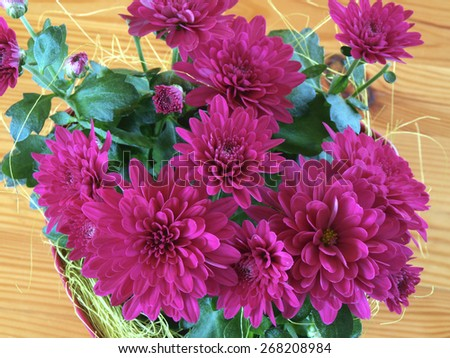 Dark purple color flower on wooden table - stock photo