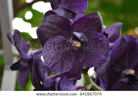 dark purple orchids stock images, royaltyfree images  vectors, Beautiful flower