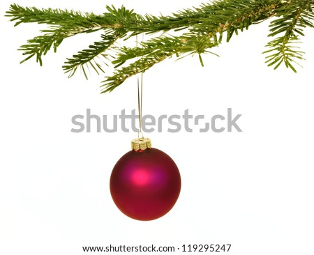 Dark red Christmas decorations hanging from a pine branch - isolated on white background