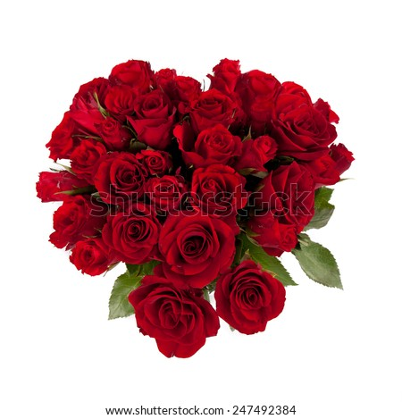 dark red roses close up isolated on white background