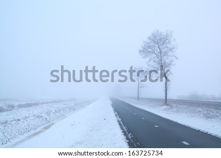 dark road and frosty tree in winter misty day, Groningen, Netherlands