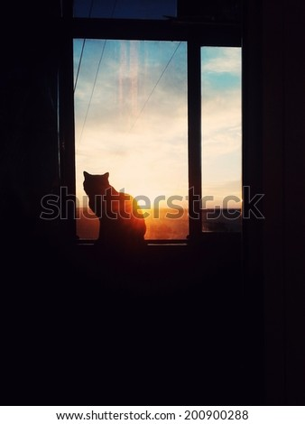 dark room in the silhouette of a cat sitting on a sunset - stock photo