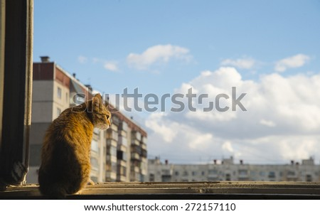 Dark room in the silhouette of a cat sitting on a sunset yellow light against high house and blue sky with white clouds Kitty sit on wooden windowsill and look down  - stock photo