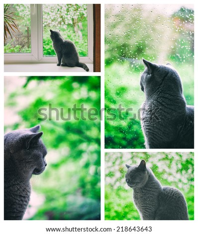 Dark silhouette of melancholic cat sitting on the window in the rain and looking at the blooming garden. Collage made of four images