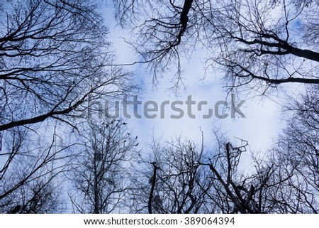 dark silhouette of trees against the sky and clouds of birds