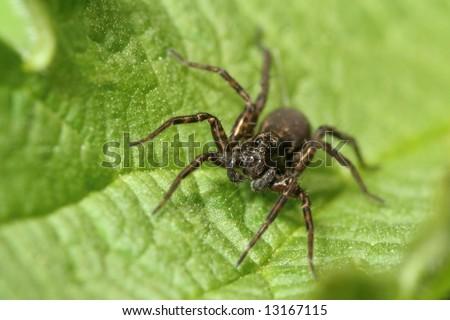 dark spider sitting on leaf - stock photo
