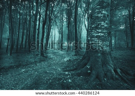 Dark spooky foggy forest. Spooky scene with big tree roots