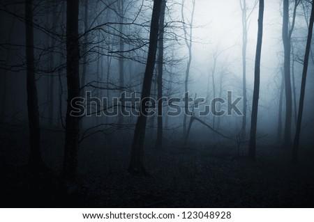 dark spooky forest night - stock photo