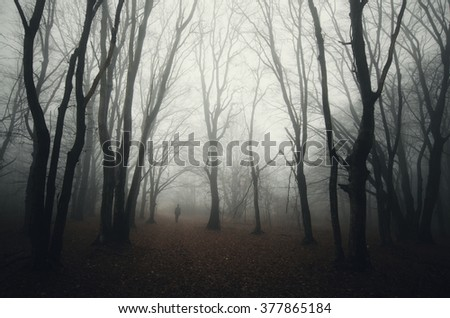 dark spooky forest with man silhouette - stock photo