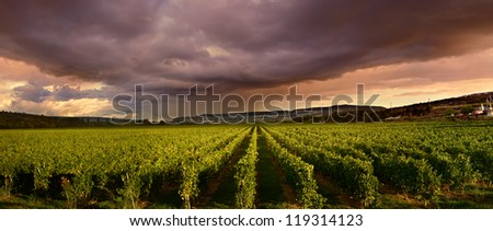 dark storm clouds gathered over the green vineyard
