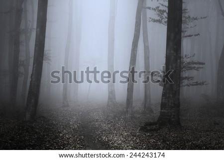 Dark trail - stock photo