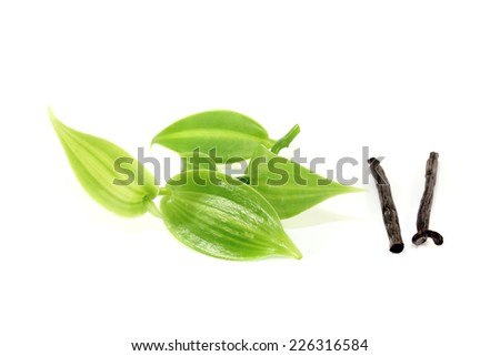 dark Vanilla sticks with vanilla leaves on a light background - stock photo