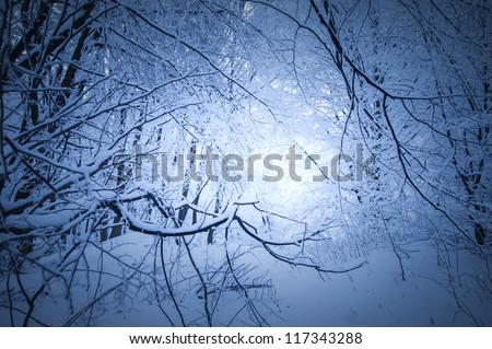 dark winter in a forest - stock photo