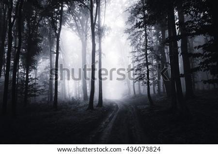 dark woods at night - stock photo