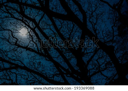 Darkness trees and the moonlight. - stock photo
