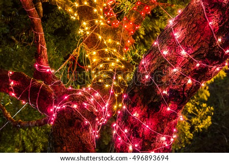 Dasara Festival lights on tree trunk in Mysore, India