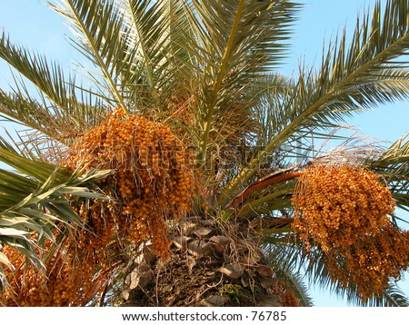 date palm shot from below - stock photo