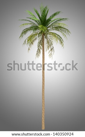 date palm tree isolated on gray background - stock photo