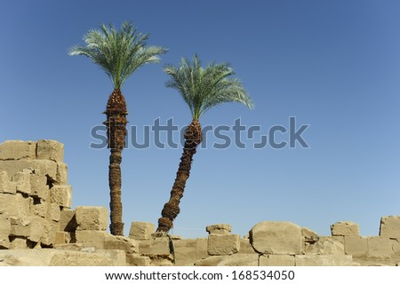 date palm tree on on ancient ruins - stock photo
