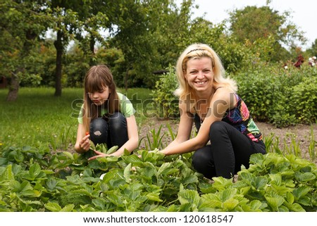 daughter and mother is working in the vegetables garden, harvested strawberries