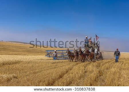 Davenport, WA. USA - Aug 22, 2015. An editorial image of an old fashioned harvest using horses at the Davenport, Washington Vintage Harvest. - stock photo