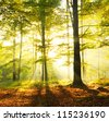 Dawn in old beech forest Poland - stock photo