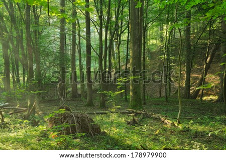Dawn in the summer forest