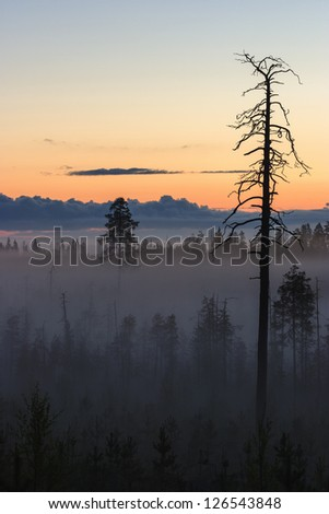 Dawn mist in the forest - stock photo