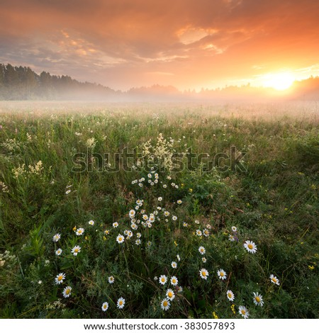 Dawn on chamomile field